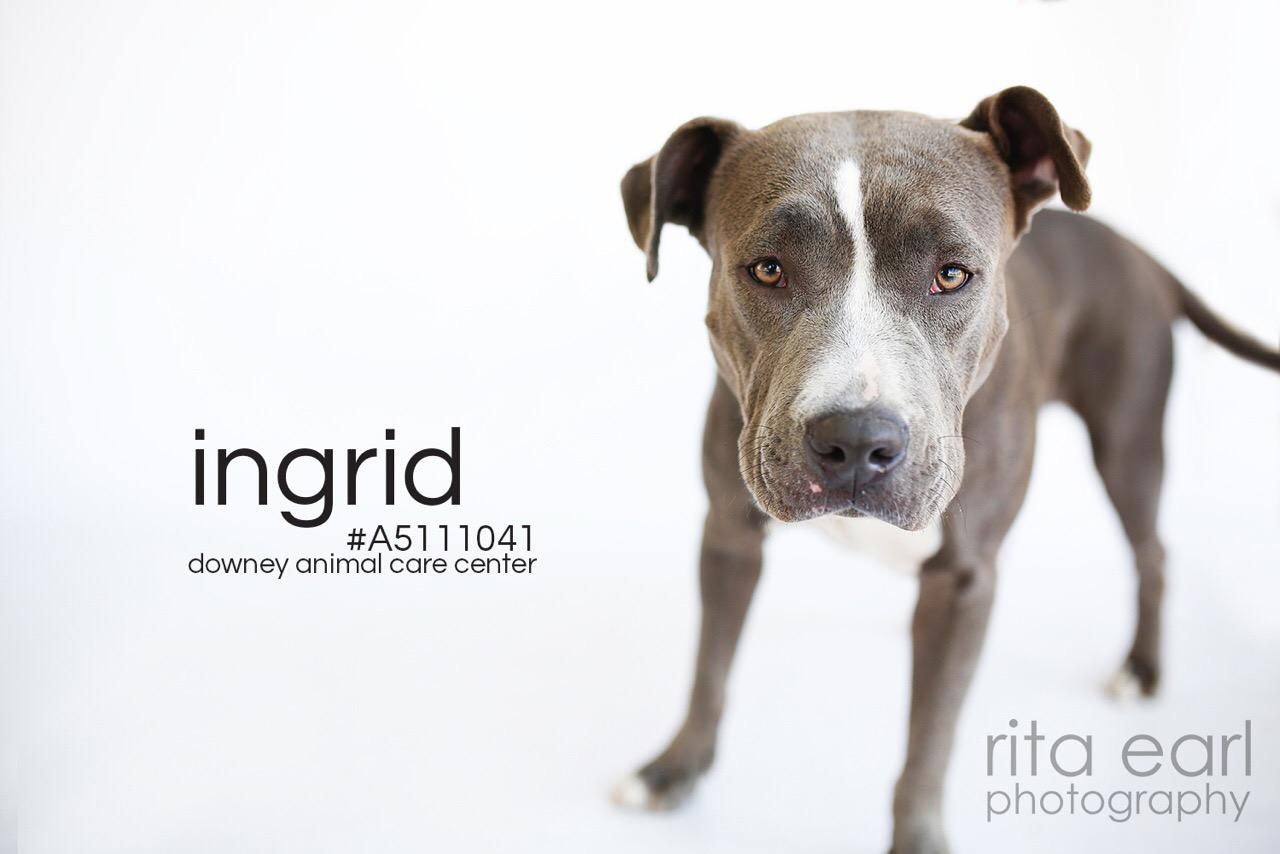 Meet Ingrid